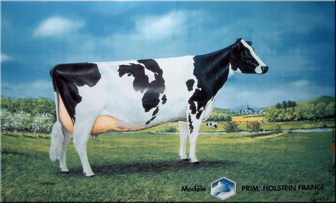 Prim'Holstein - publicité sur plaque émaillée - © Manufacture Vosgienne d'Émaillage